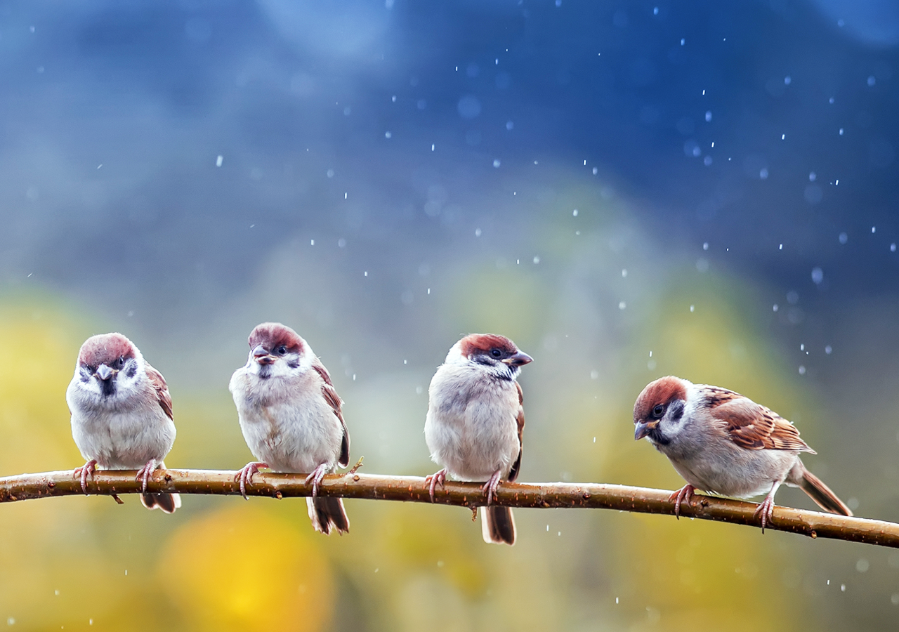 Group of birds on branch